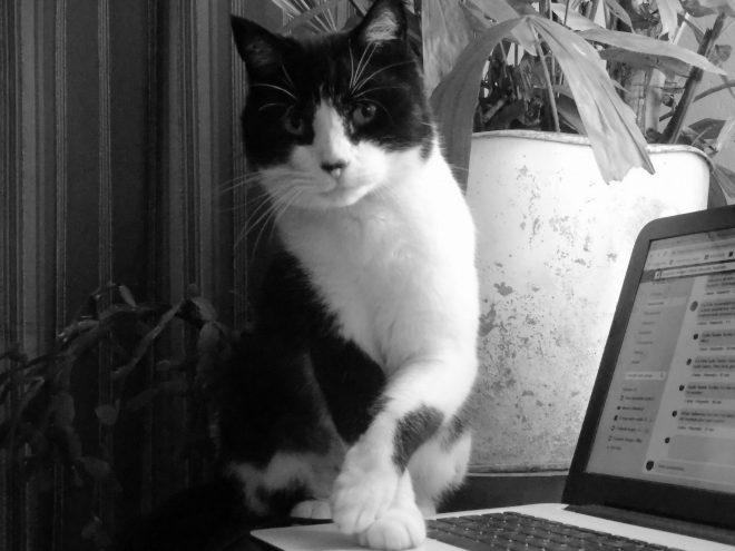 Le chat et les réseaux sociaux