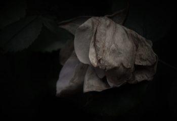 morte nature