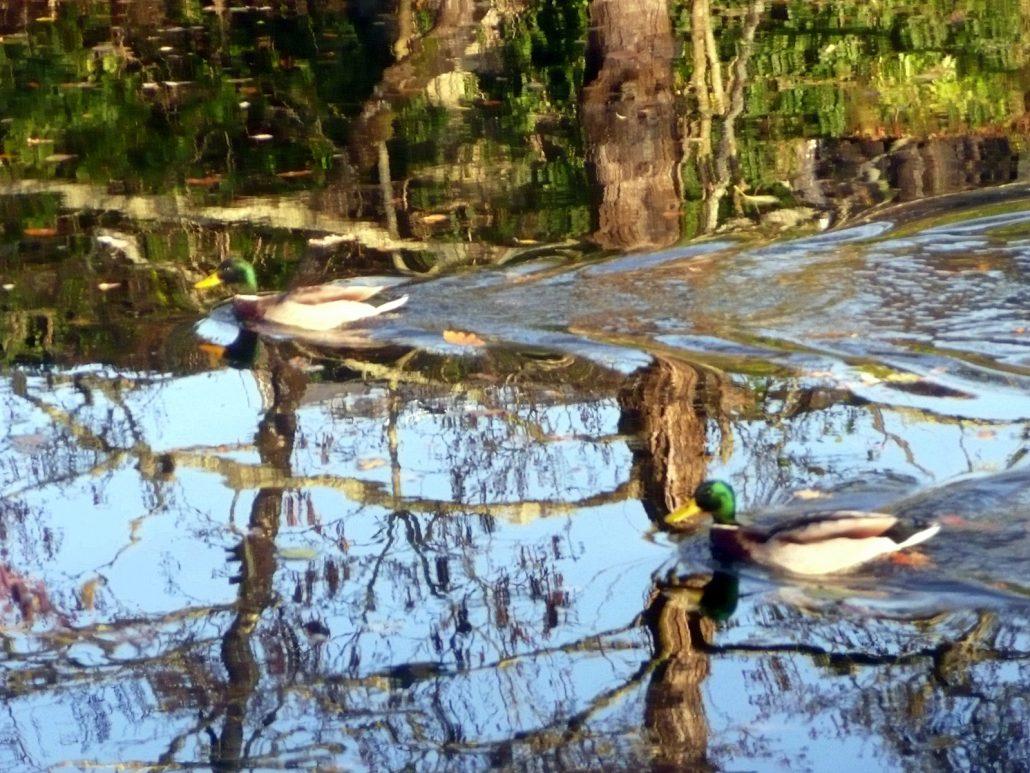 Mirage pour les canards