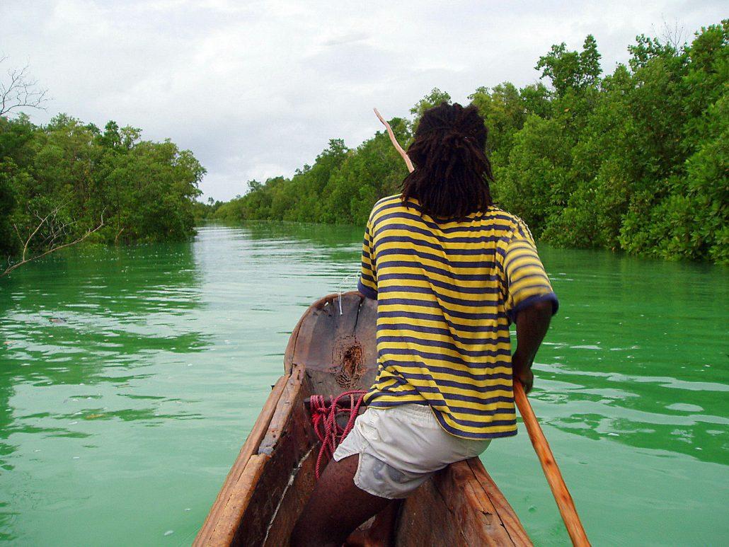 Rayures sur la Mangrove