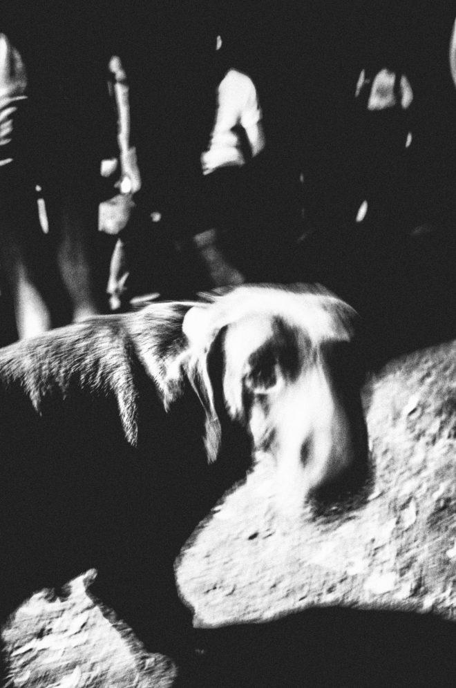 Night Dog (4/6)