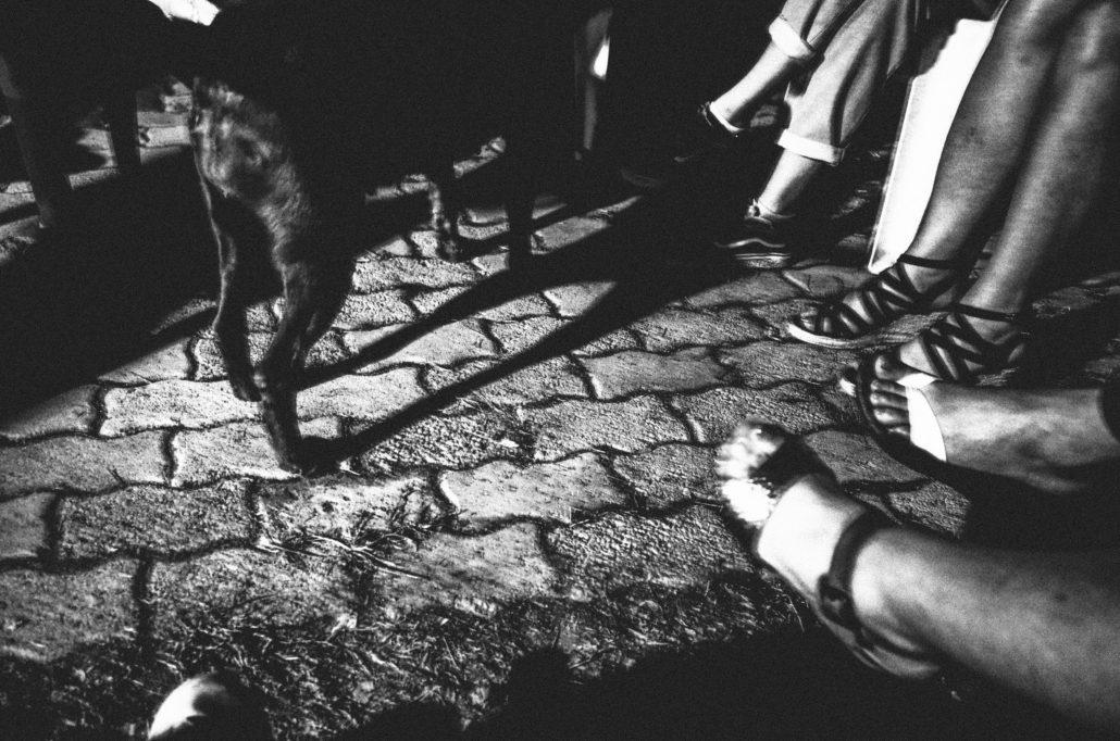 Night Dog (5/6)