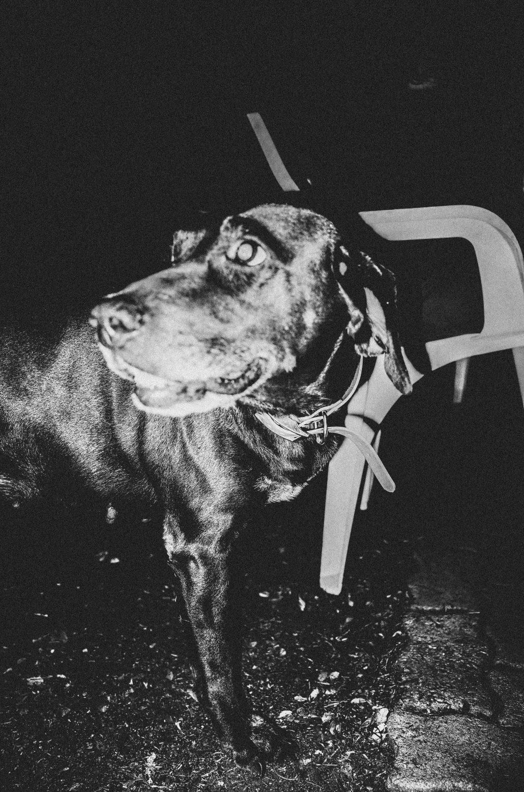 Night dog (6/6)