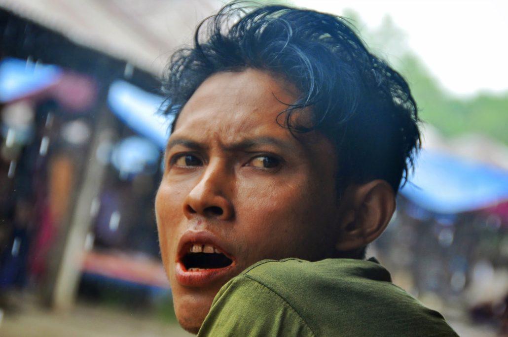 portrait birman