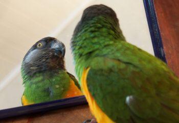 miroir oh... miroir.....