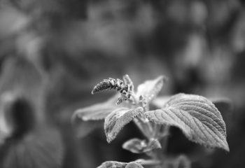 Bokeh de fleur