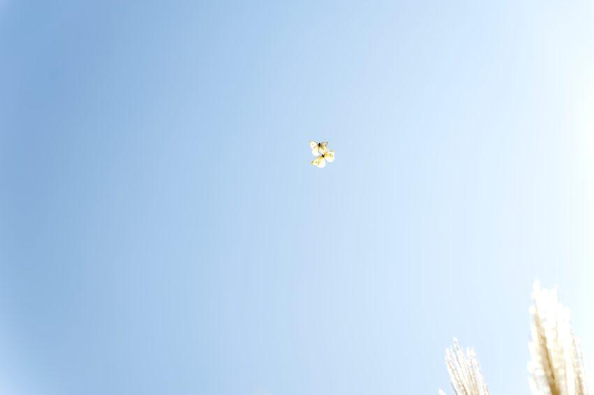 Butter-FLY