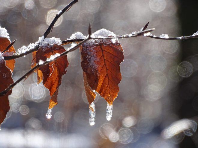 bokeh frozen leaves