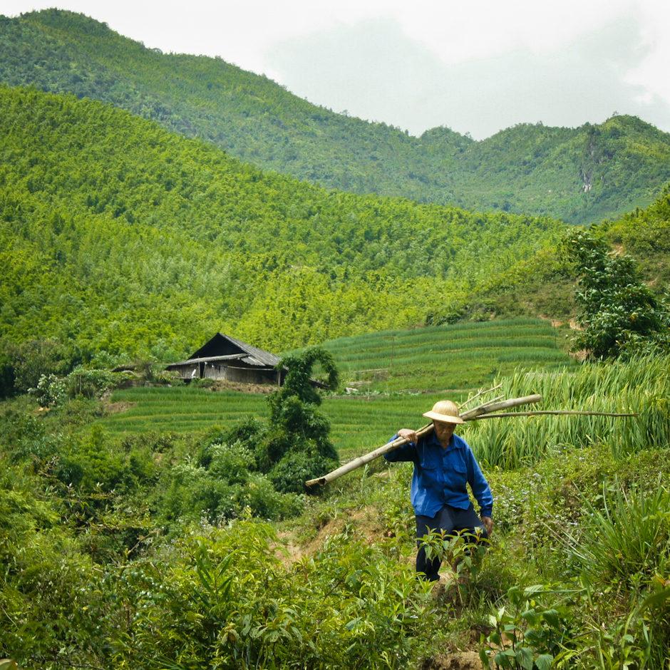 Viet Worker