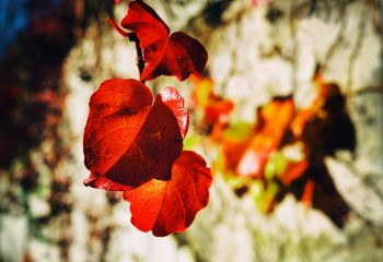 automne psychèdélique