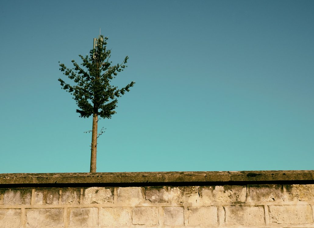 le pin exploité