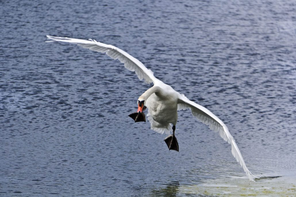 atterrissage