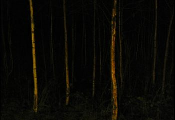 Bouleaux la nuit