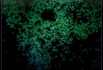 Mur végétal la nuit
