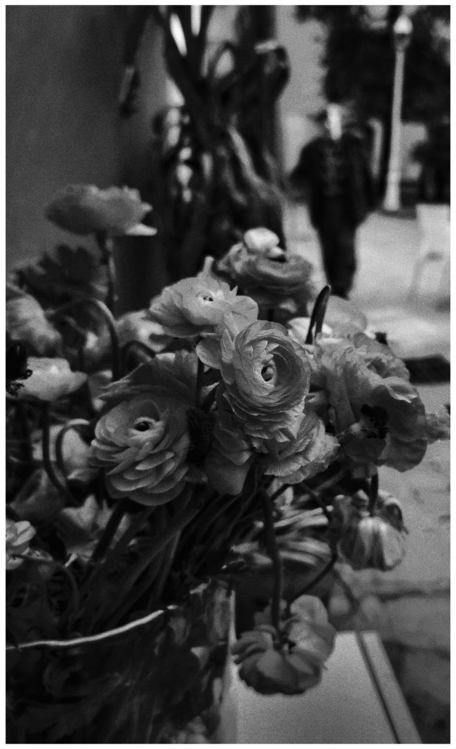 Les fleurs du globe-trotter