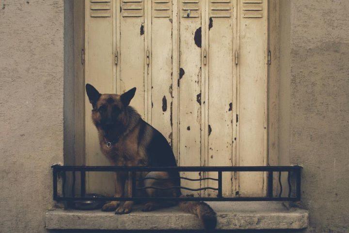 Le chien le plus triste de Paris