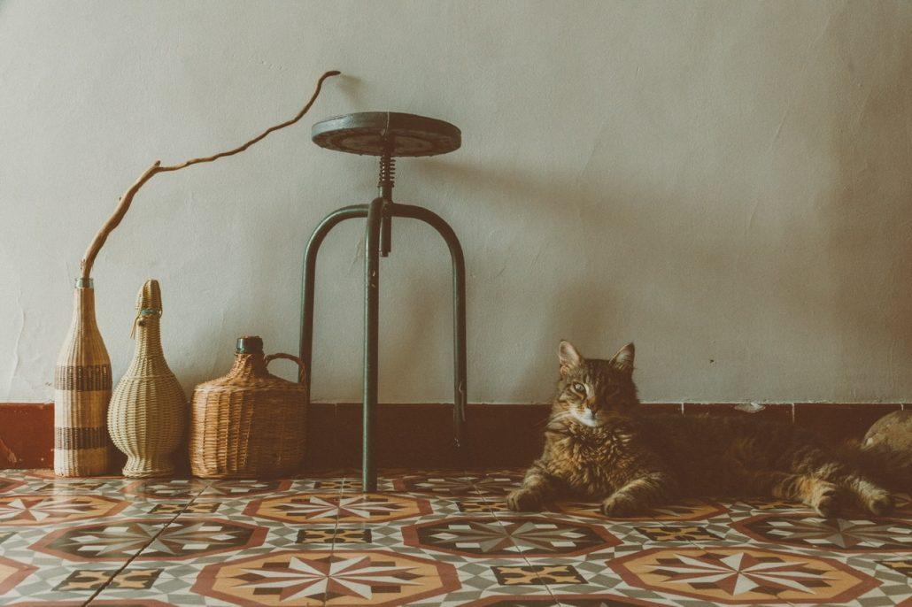 Wabisabi Cat