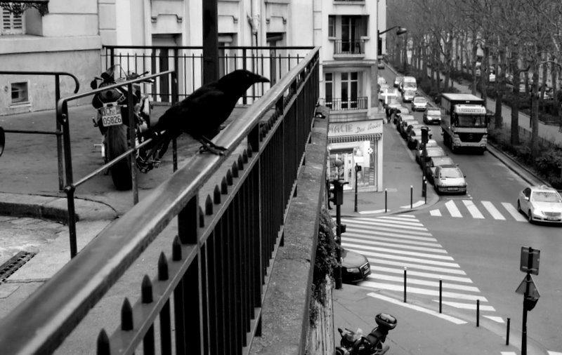 Un corbeau sur une branche contemporaine