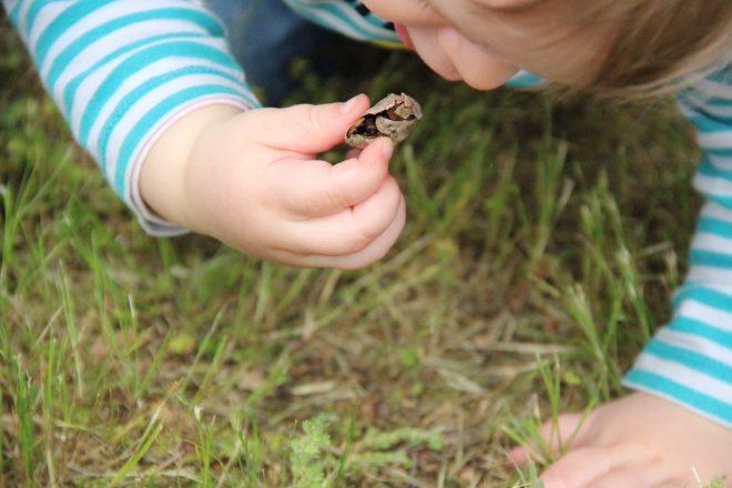 Découverte dans la pelouse