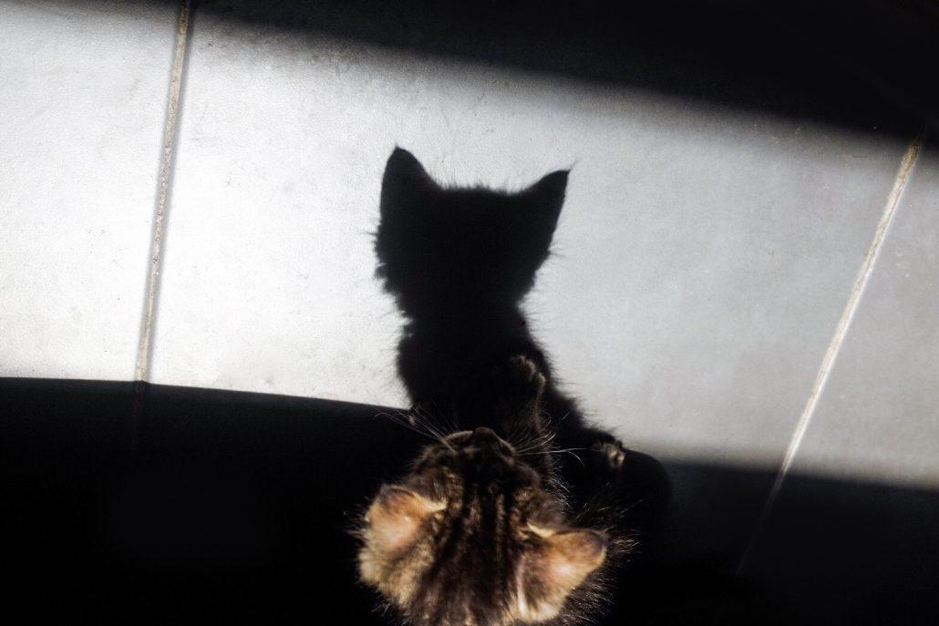 Kitty-piti