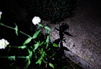 Flower de nuit