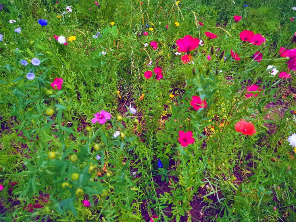 Fleurs monceau