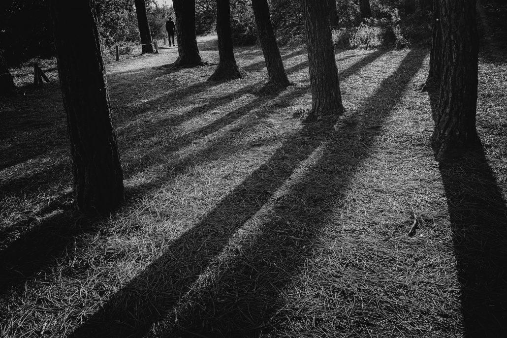 Promenons nous dans les bois…
