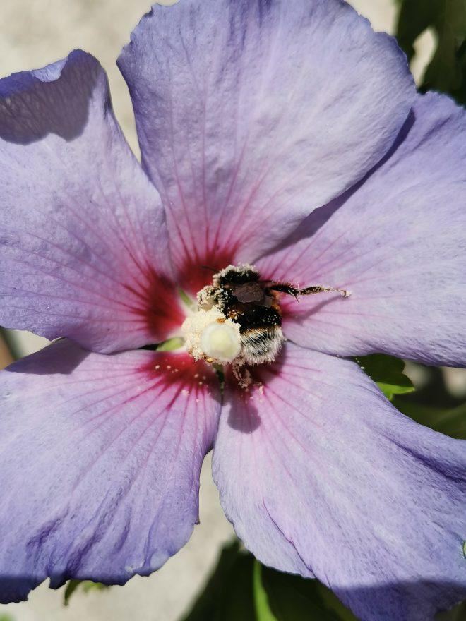 Pollinisation précieuse