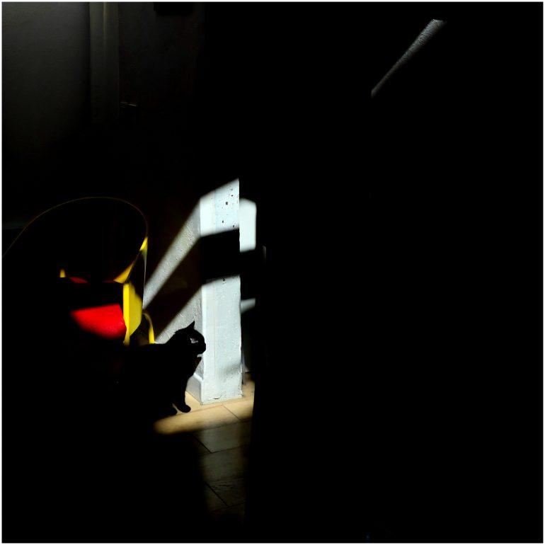 A LA MAISON Le chat noir