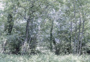 L'orée du bois