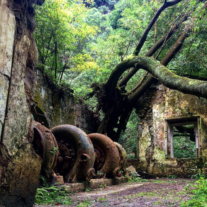 Naturalia - Les Açores