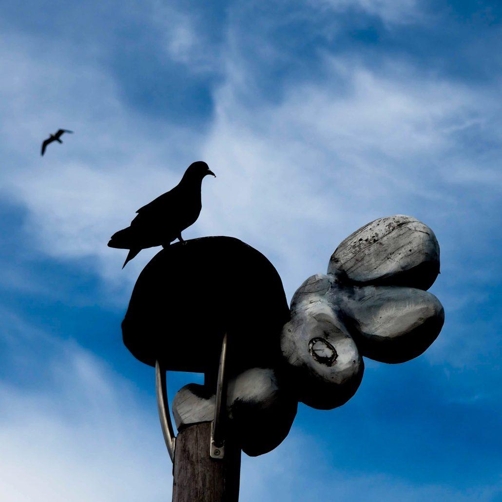 Black doves silhouettes