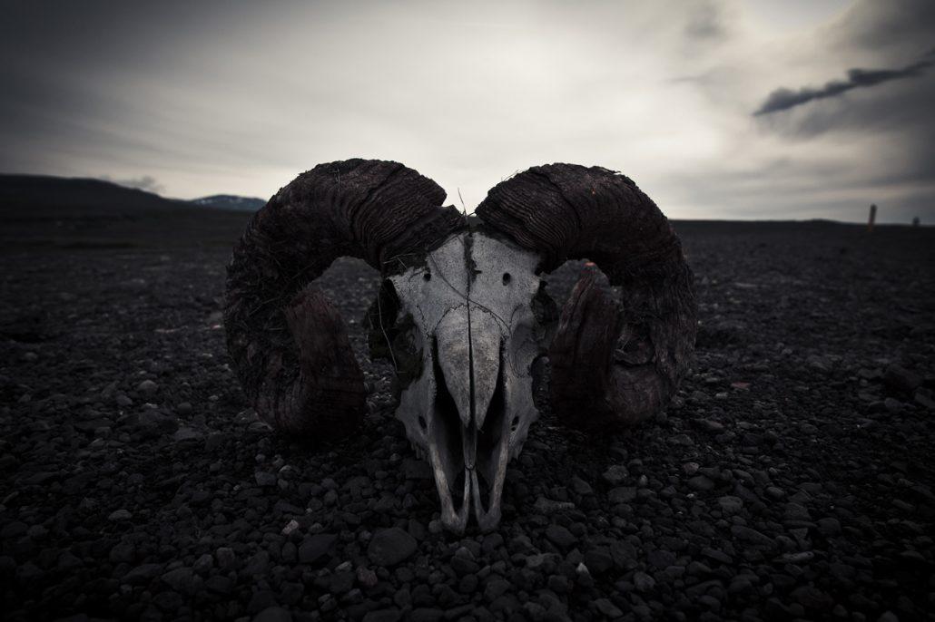 Skull**