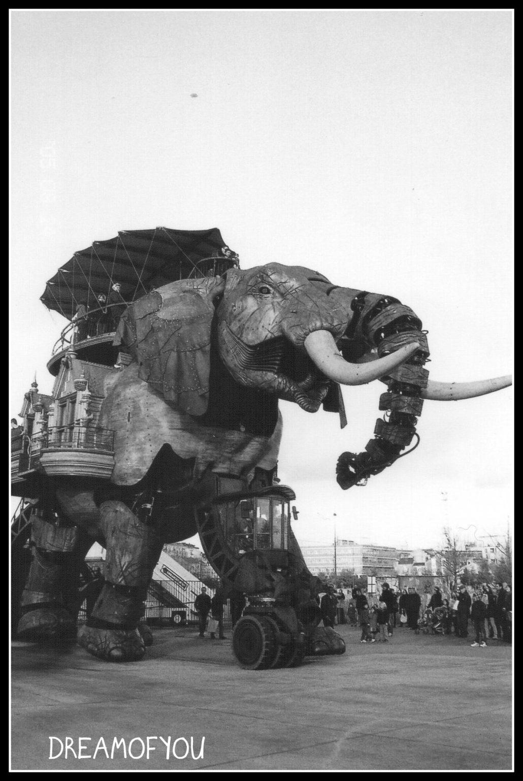 La marche de l'Eléphant