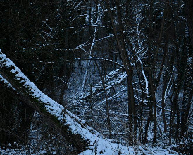 les bois sont impénétrables 09