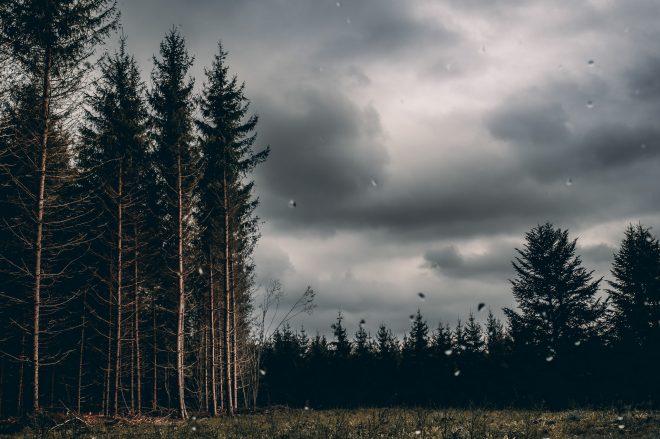 Heay Rain – The Trees #2