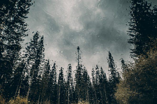 Heavy Rain - The Trees #1
