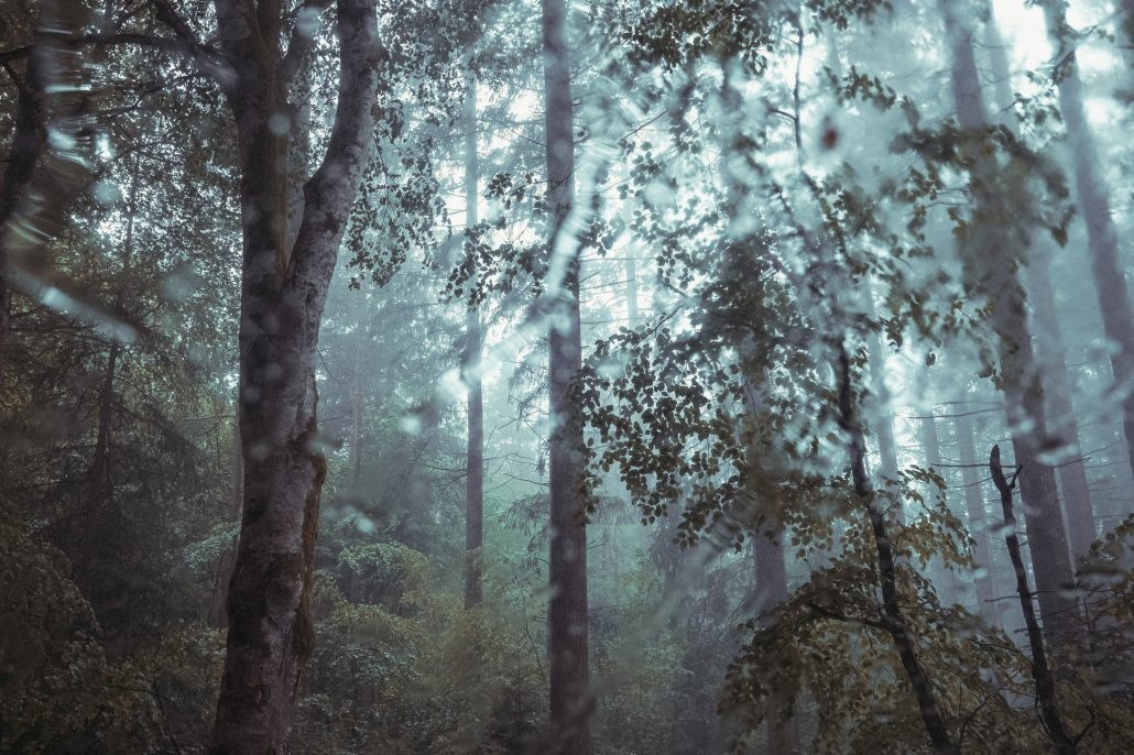 Heay Rain – The Trees #3