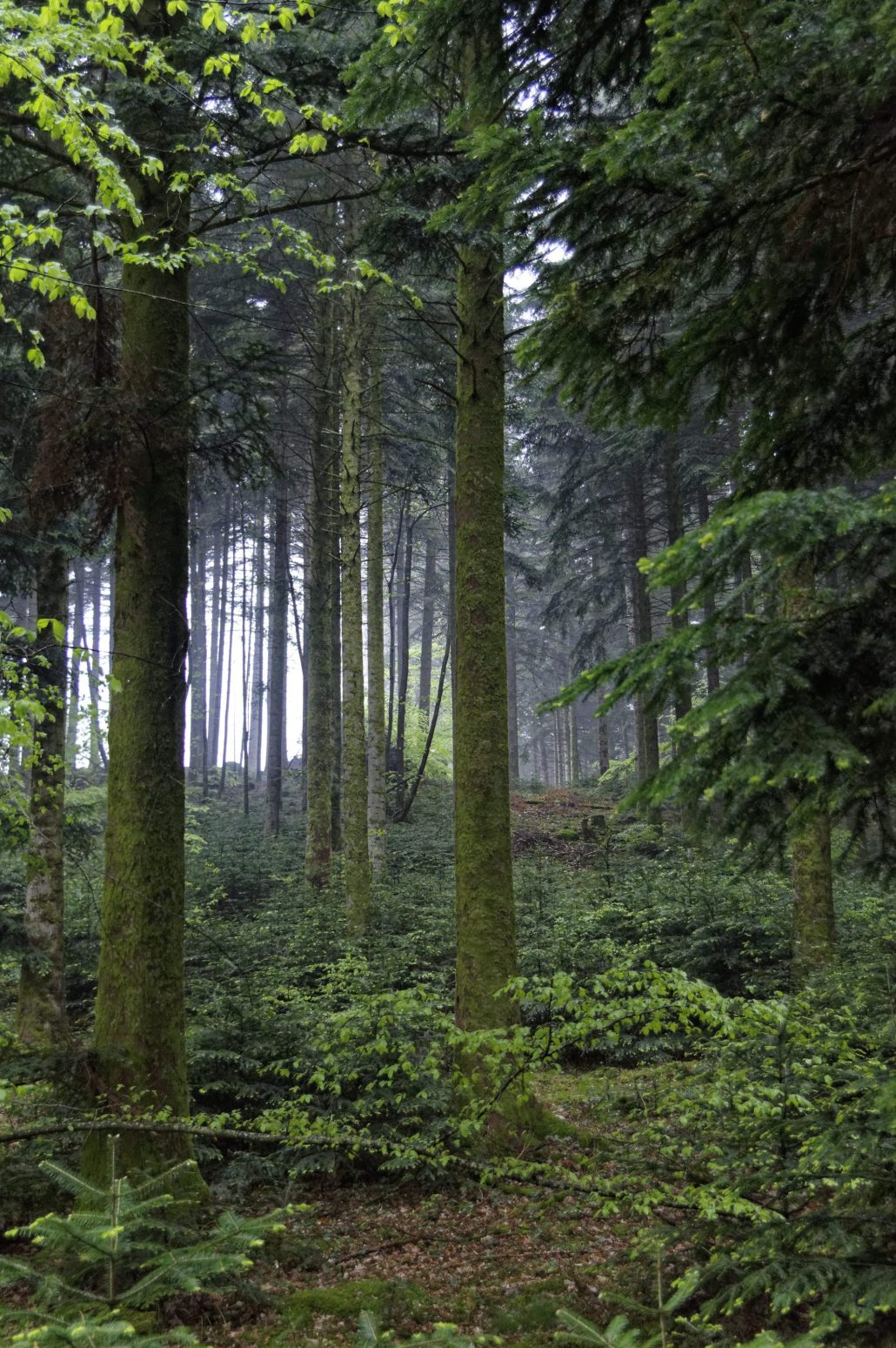 Sous bois sous la pluie