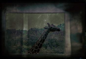Cirque triste 5