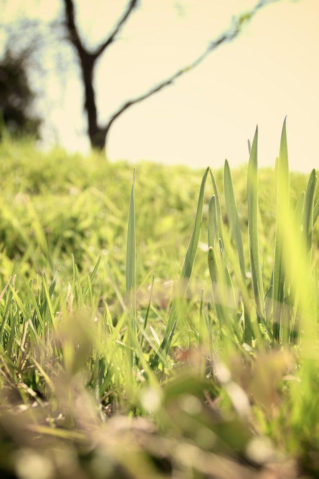 Grass – A hauteur d'insecte