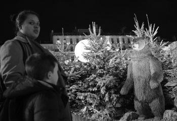 Elle a vu l'ours