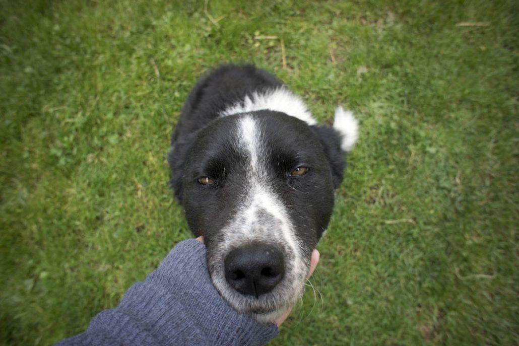 Nice curly hear Dog