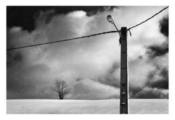 un arbre et une lampe