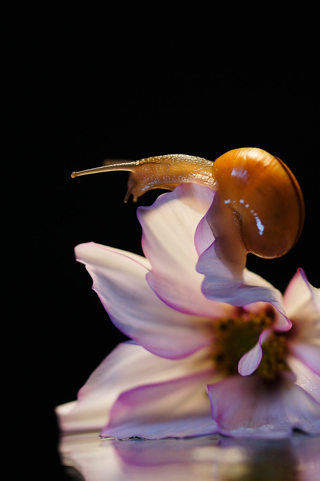 Monsieur escargot