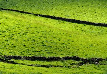 Green irlande