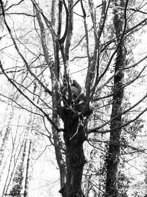 Le fruit dans l'arbre……..