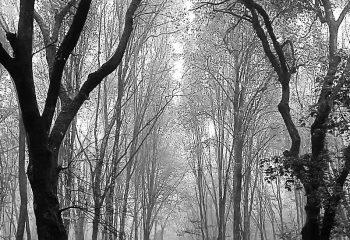 automne Jura
