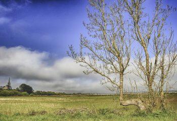 L'arbre-banc