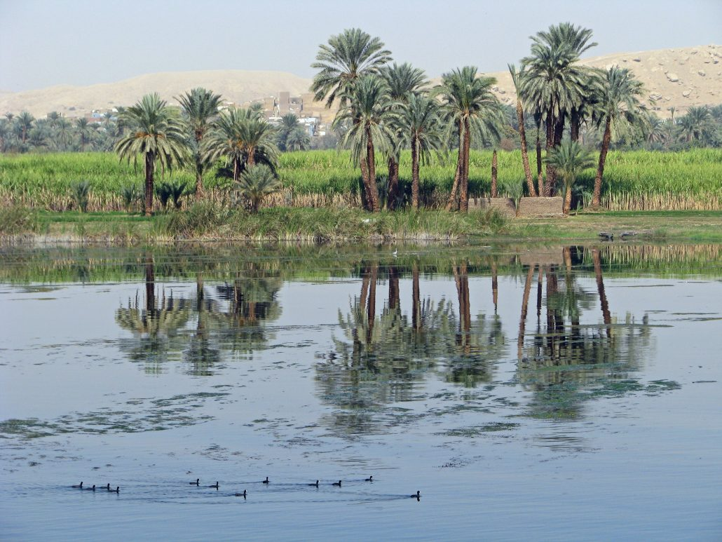 canards du Nil